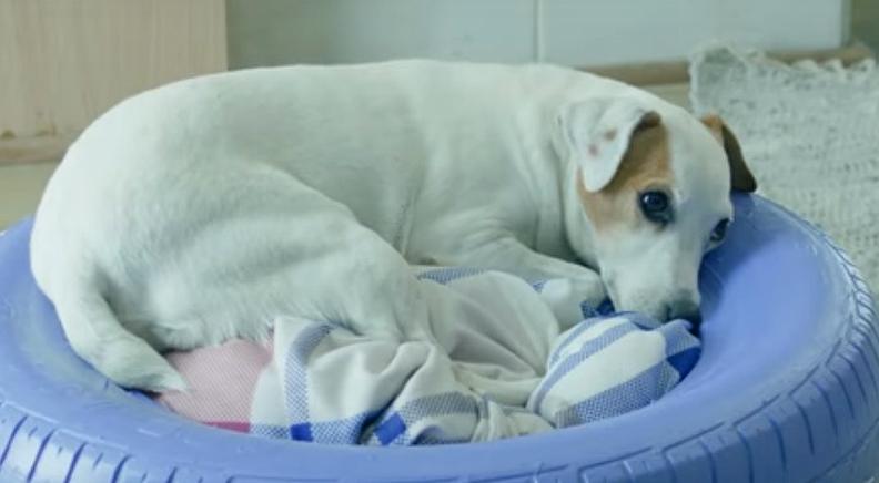 Boysen Doggie Day-Bed Cost Breakdown