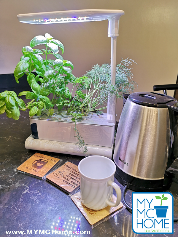 Tabletop Hydroponics at MY MC Home